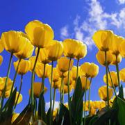 Boek nu en ontvang het bloembollenpakket
